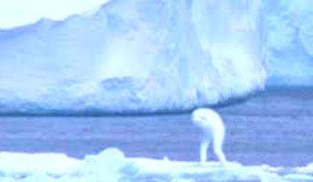 Los Ningen en el Antártida