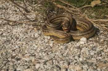 soñar con una serpiente viva