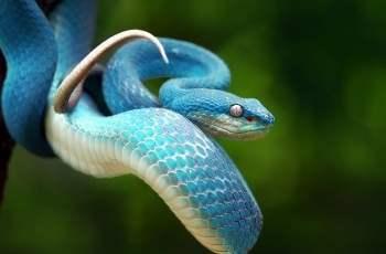cuál es el significado de las serpientes
